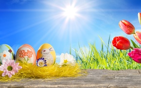 Картинка трава, солнце, цветы, яйца, весна, пасха, тюльпаны, sunshine, happy, tulips, spring, eggs, easter