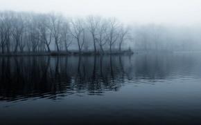 Картинка лес, вода, мистика, черно-белое