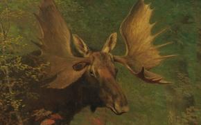 Картинка животное, картина, рога, Альберт Бирштадт, Изучение Лося