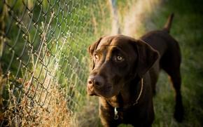 Картинка фон, забор, собака