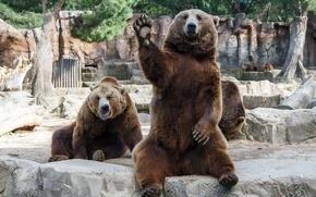 Обои лапа, hangover, dudes, мужики, чуваки, взмах, bears, медведи, zoo, situation, ситуация, похмелье, зоопарк, дружба, друзья, ...
