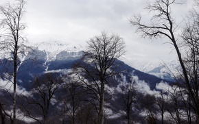 Картинка деревья, горы, фон