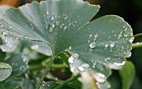 Картинка капли, макро, лист, роса, дождь, круглый