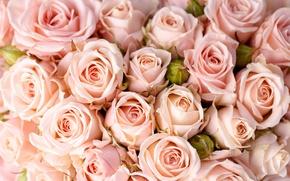 Картинка цветы, розы, букет, flowers, bouquet, roses