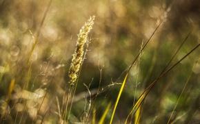 Картинка лето, растения, весна, боке