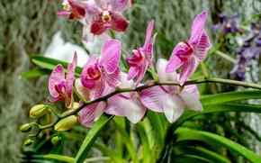 Картинка flower, nature, flora, orhid