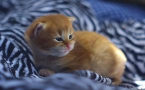 Картинка котёнок, рыжий, малыш, рыжий котёнок