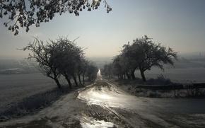 Обои дорога, пейзаж, туман, утро