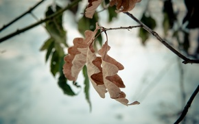 Картинка лист, дерево, ветка