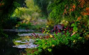 Картинка ветки, пруд, парк, Англия, боке, England, Гэмпшир, Hampshire, Ромси, Sir Harold Hillier Gardens, Romsey