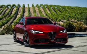 Обои Alfa Romeo, альфа ромео, Quadrifoglio, Giulia, джулия