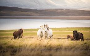 Картинка горы, река, поля, лошади, river, field, mountain, horses
