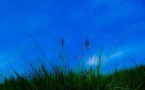 Картинка небо, трава, природа, растение