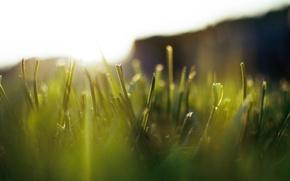 Картинка зелень, трава, макро, свет, природа, роса, газон