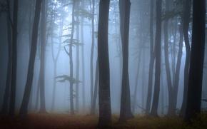 Картинка туман, деревья, лес, пейзаж, природа