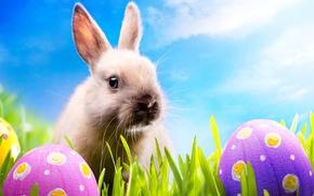 Картинка трава, яйца, весна, кролик, луг, пасха, grass, sunshine, rabbit, spring, blue sky, eggs, easter, bunny, …