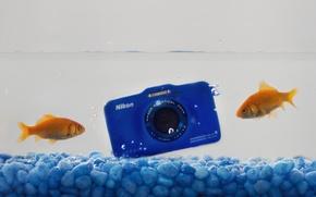 Картинка вода, рыбки, камера, Nikon