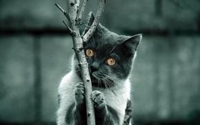 Обои branch, fur, Feline
