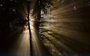 Картинка лес, солнце, лучи, свет, деревья, природа