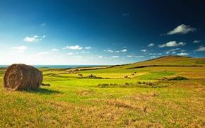 Обои поле, небо, облака, пейзаж, стог, горизонт, луг, сено, зелёное, синее, Green, field, landscape, village, meadow, ...