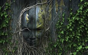 Картинка природа, лицо, корни, забор, плющ