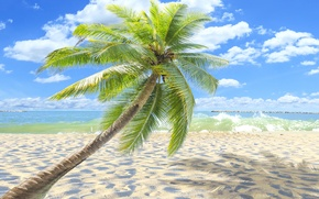 Картинка пальмы, paradise, берег, palms, пляж, sea, песок, море, sand, shore, beach, summer, tropical