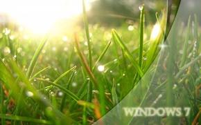 Картинка трава, солнце, свет, роса, green, system
