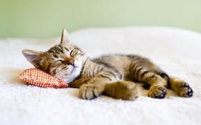 Картинка котенок, спит, лежит, подушка