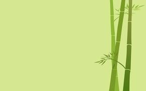 Обои листья, ветка, бамбук, стебель