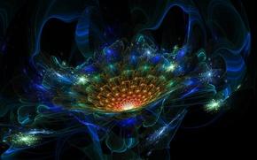 Картинка цветок, линии, полосы, изгибы, чёрный фон