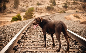 Картинка друг, собака, железная дорога
