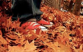 Обои кеды, осень, листья