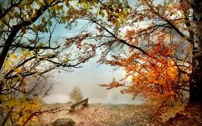 Обои скамья, река, парк, осень