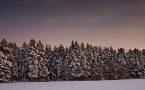 Картинка лес, снег, деревья, дом, Зима