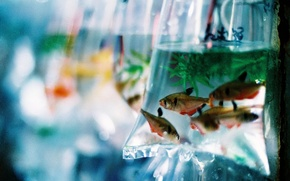 Картинка вода, пакет, Рыбки