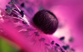 Картинка цветок, природа, обои, лепестки