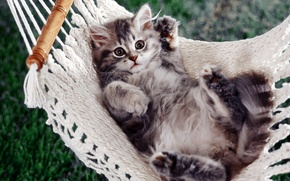 Обои котенок, лапы, гамак
