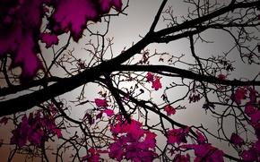 Обои листва trees, природа, листопад, деревья, осень, autumn