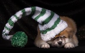 Картинка шапка, щенок, японская акита