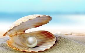 Картинка песок, море, пляж, ракушка, beach, sea, sand, shore, seashell, жемчужина, perl
