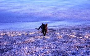 Обои море, кошка, пляж