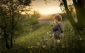Картинка природа, мальчик, одуванчики