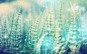 Картинка линии, растения, Обработка