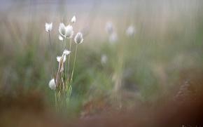 Картинка трава, размытость, колоски, Benjamine