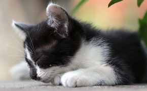 Картинка белый, листья, котенок, черный