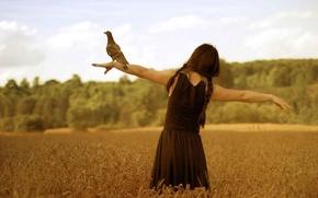 Картинка поле, свобода, девушка, птица, монтаж