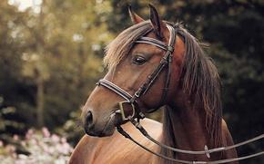 Картинка лошадь, боке, сбруя