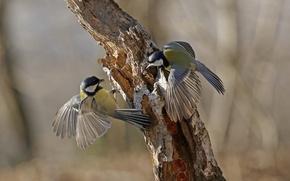 Обои дерево, птицы, перья, хвост, крылья, ствол