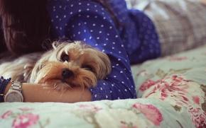 Картинка собаки, морда, девушка, фон, обои, собака, собачка, wallpapers