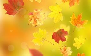 Картинка осень, листья, полёт